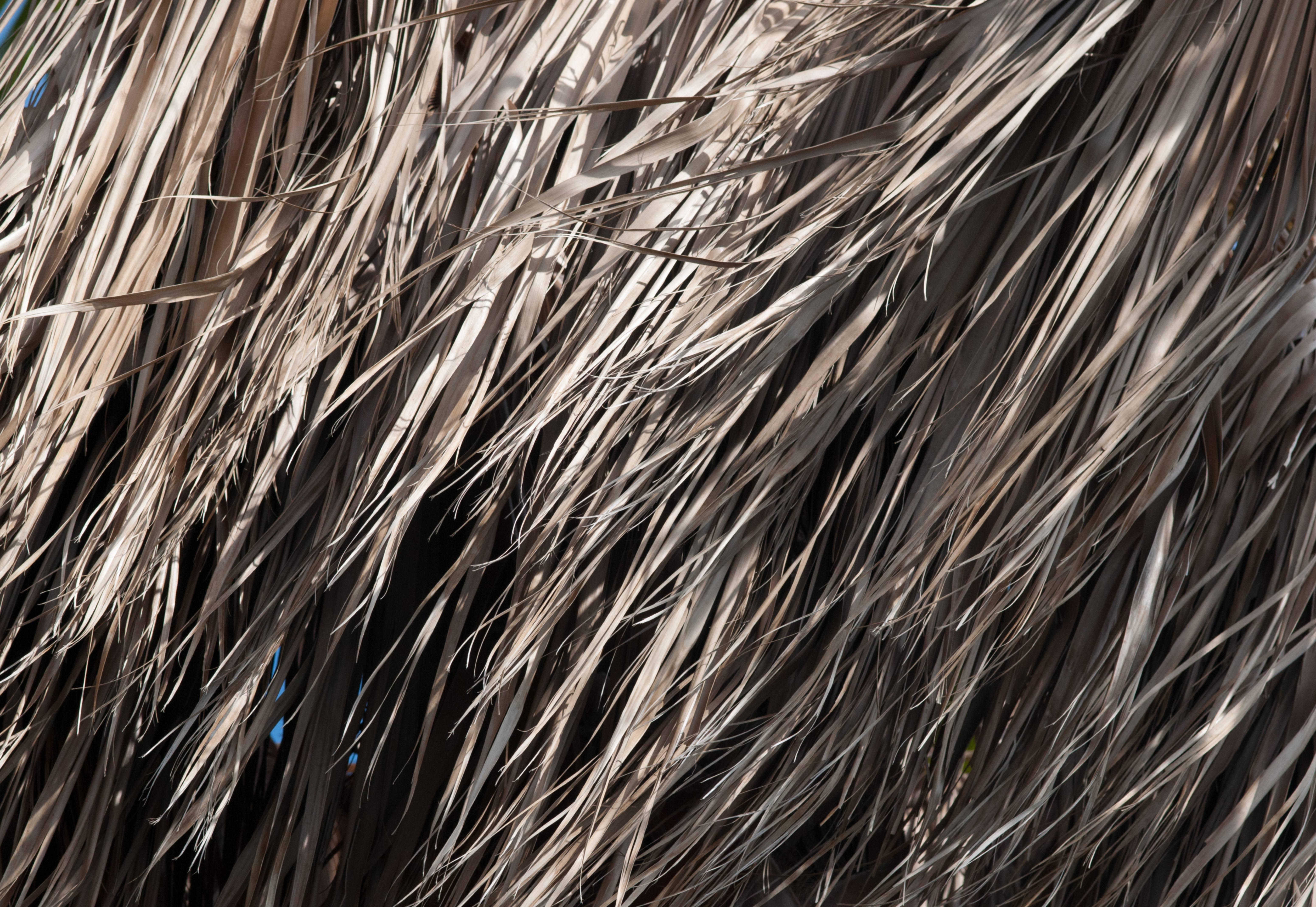 Dried Leaves Hair