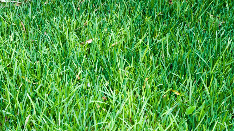 Grass field close-up background