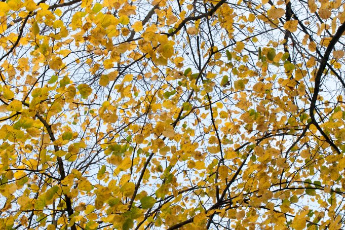 Fall Leaves sky background