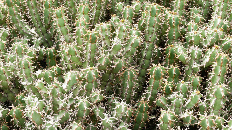 Small Green Cactus
