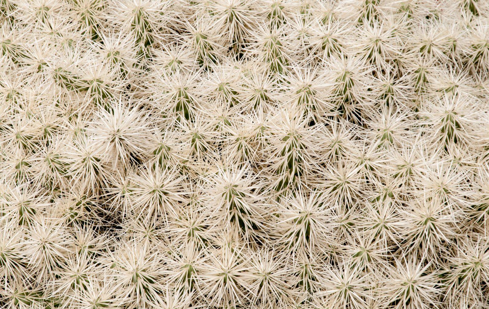 White cactus group background