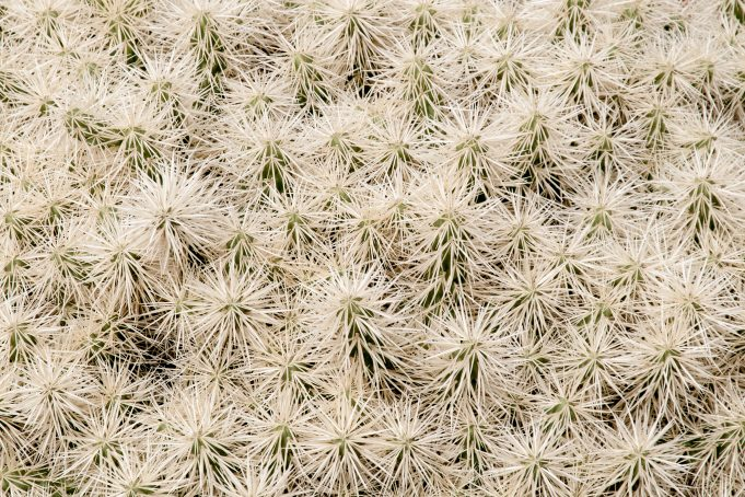 White cactus group background
