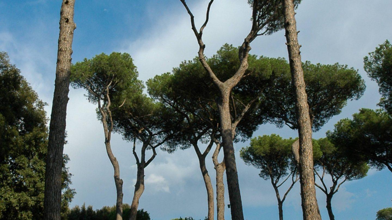 Typical Italian Roman park trees