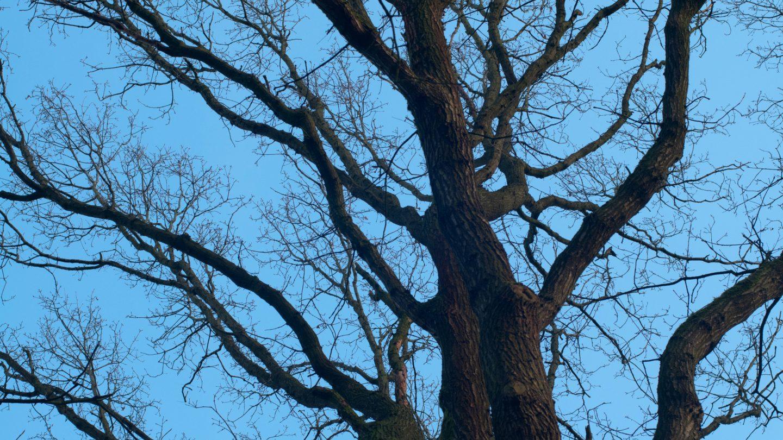 Big treetop