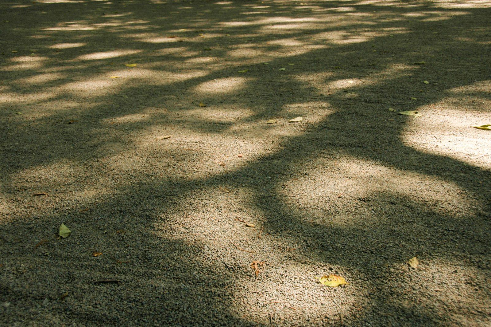Central Park Shadows