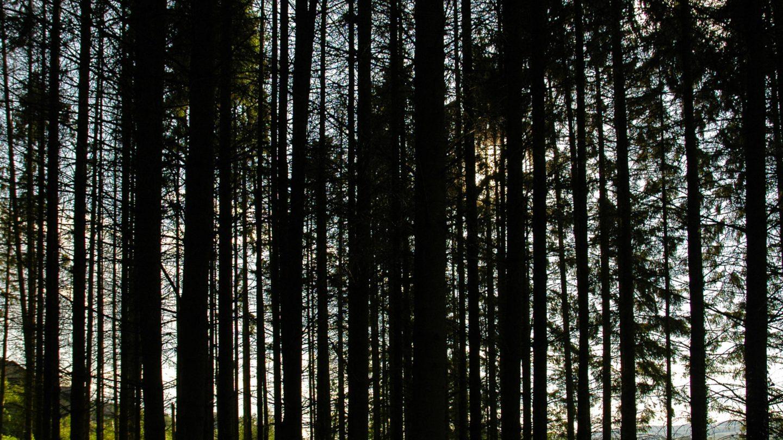 Silhouette of Tree trunks that Block Sunlight