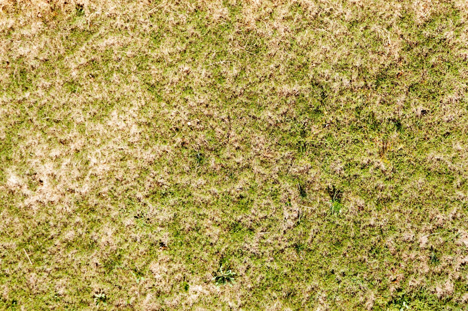 Dry green grass background