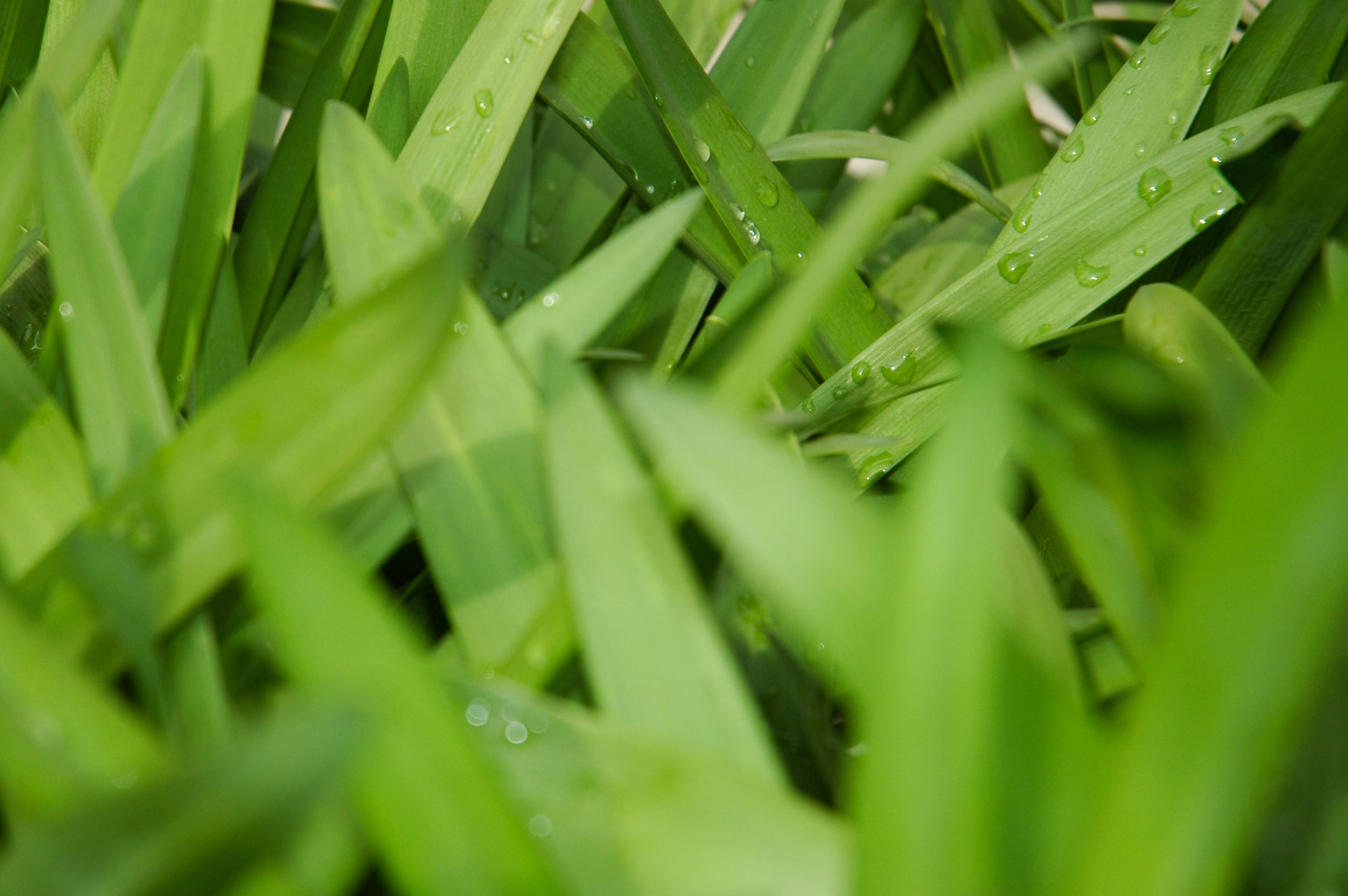 Large Green Leaves Texture