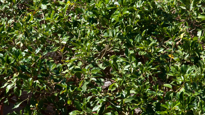 Green Bushes background