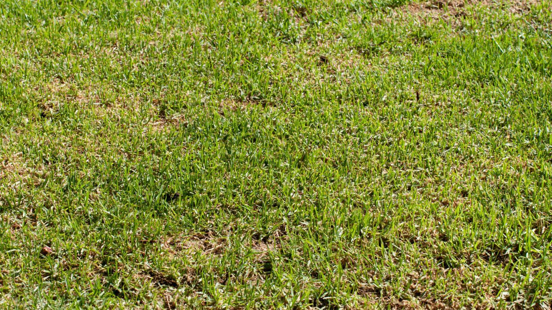 Strong Grass