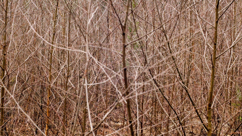 Bush Branches Pattern