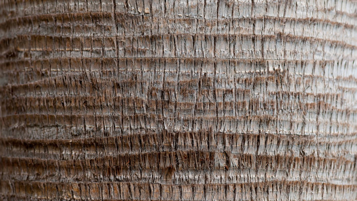 Palm Tree Trunk Full frame background texture