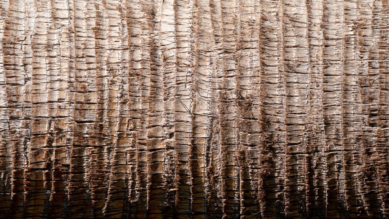 Palm Tree Trunk horizontal