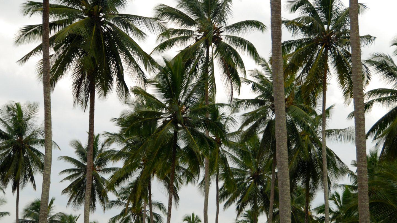 Palm Trees Pattern