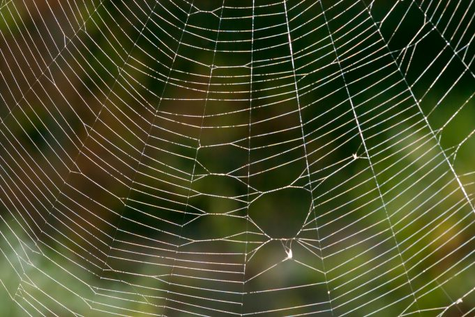 Part of a Spider Web Close-Up on Green Backdrop