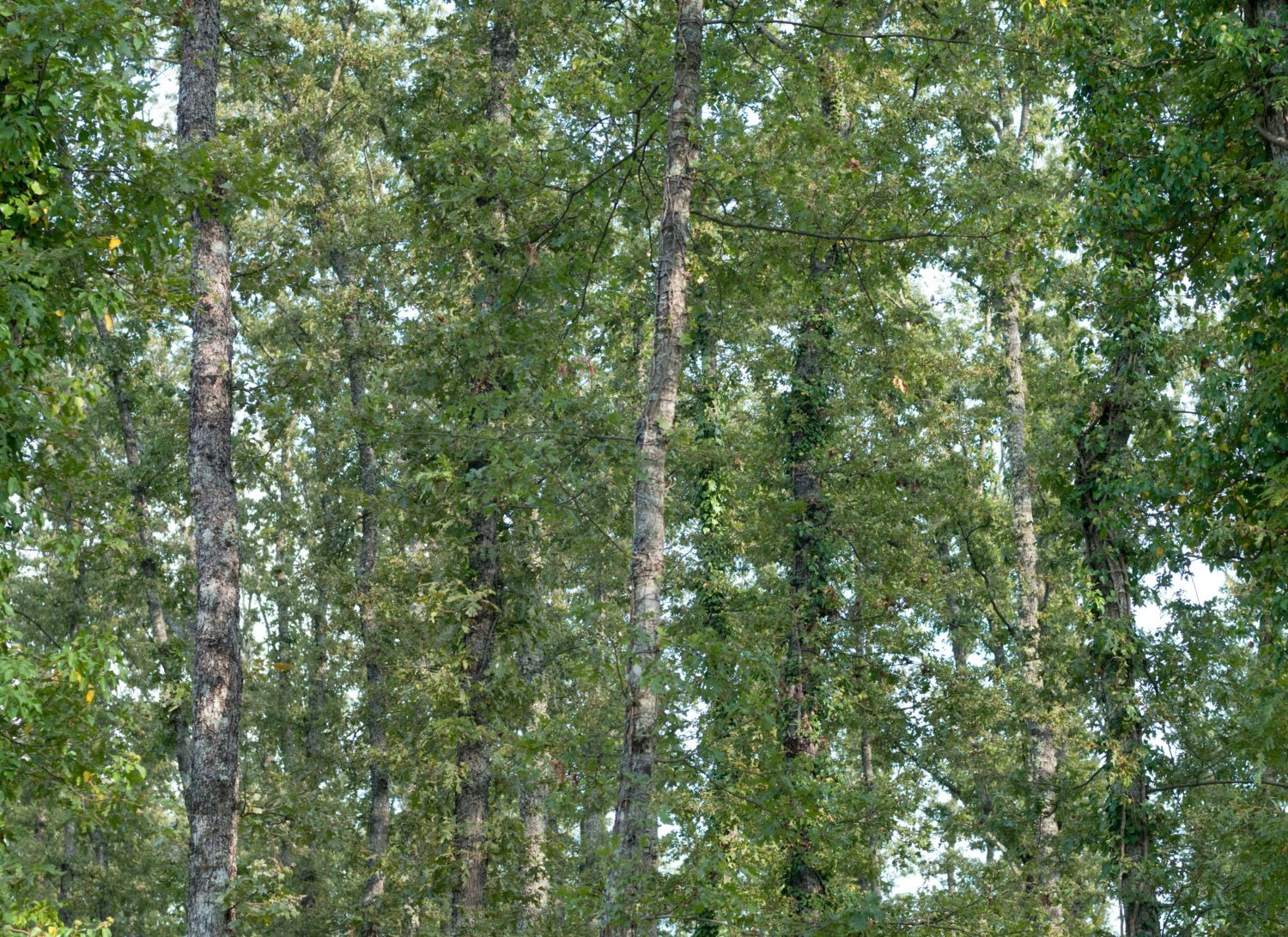 Pattern of forrest trees