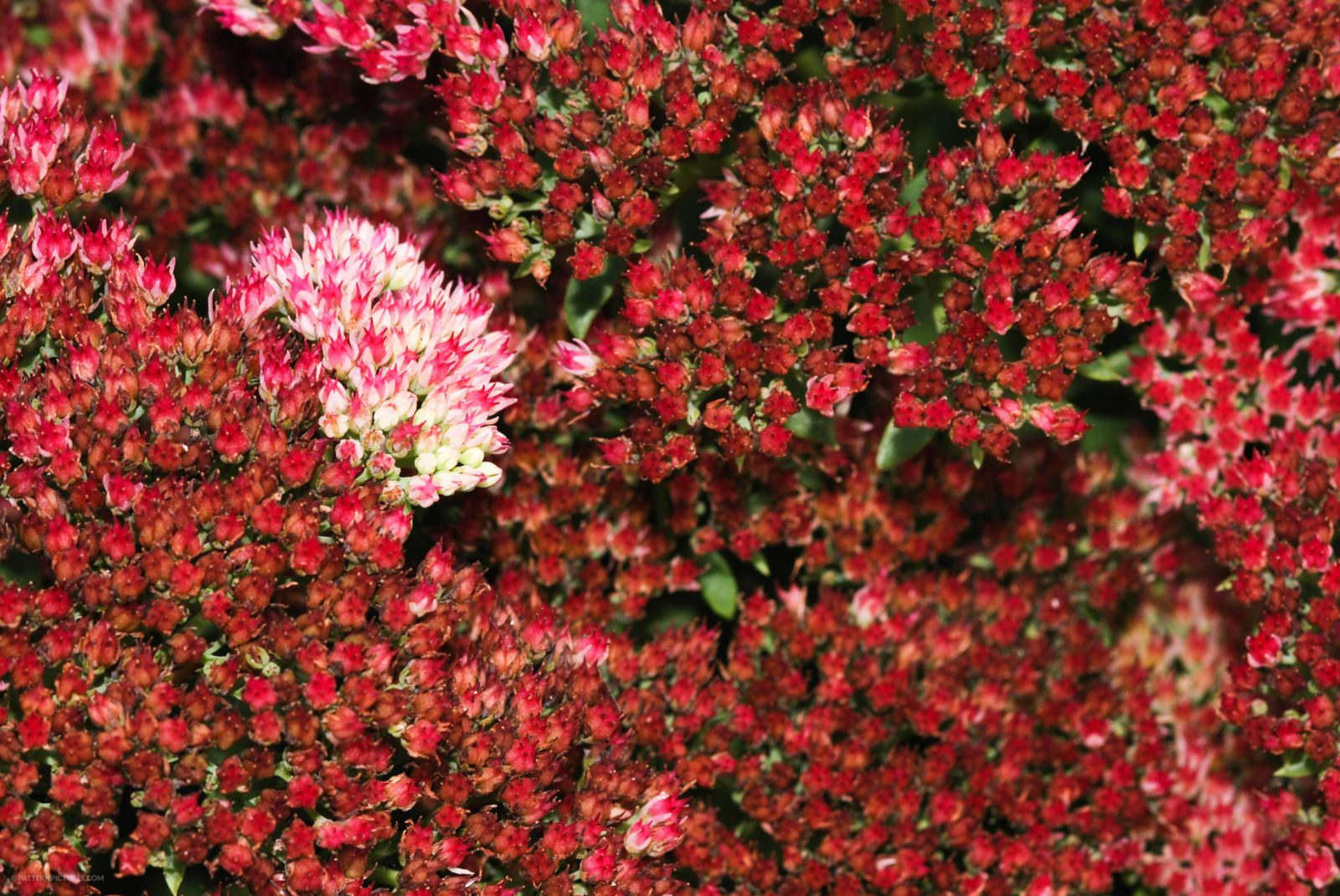 Red flowers stand out from the rest