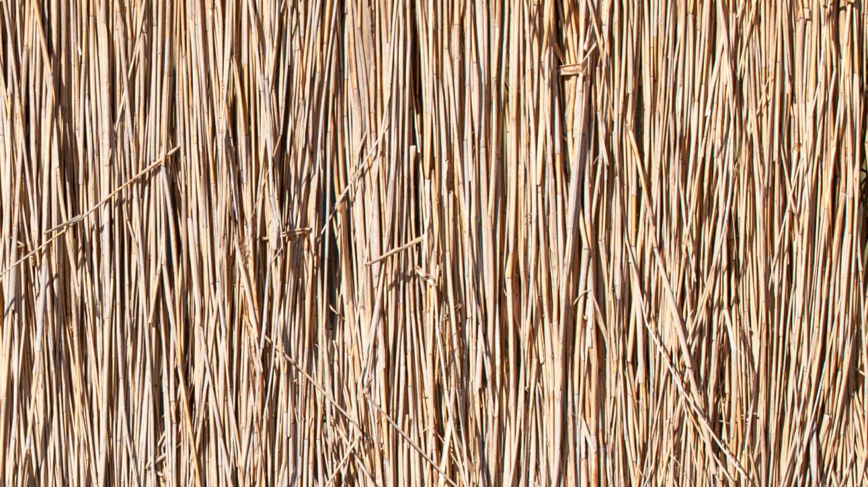 Reed stalks texture