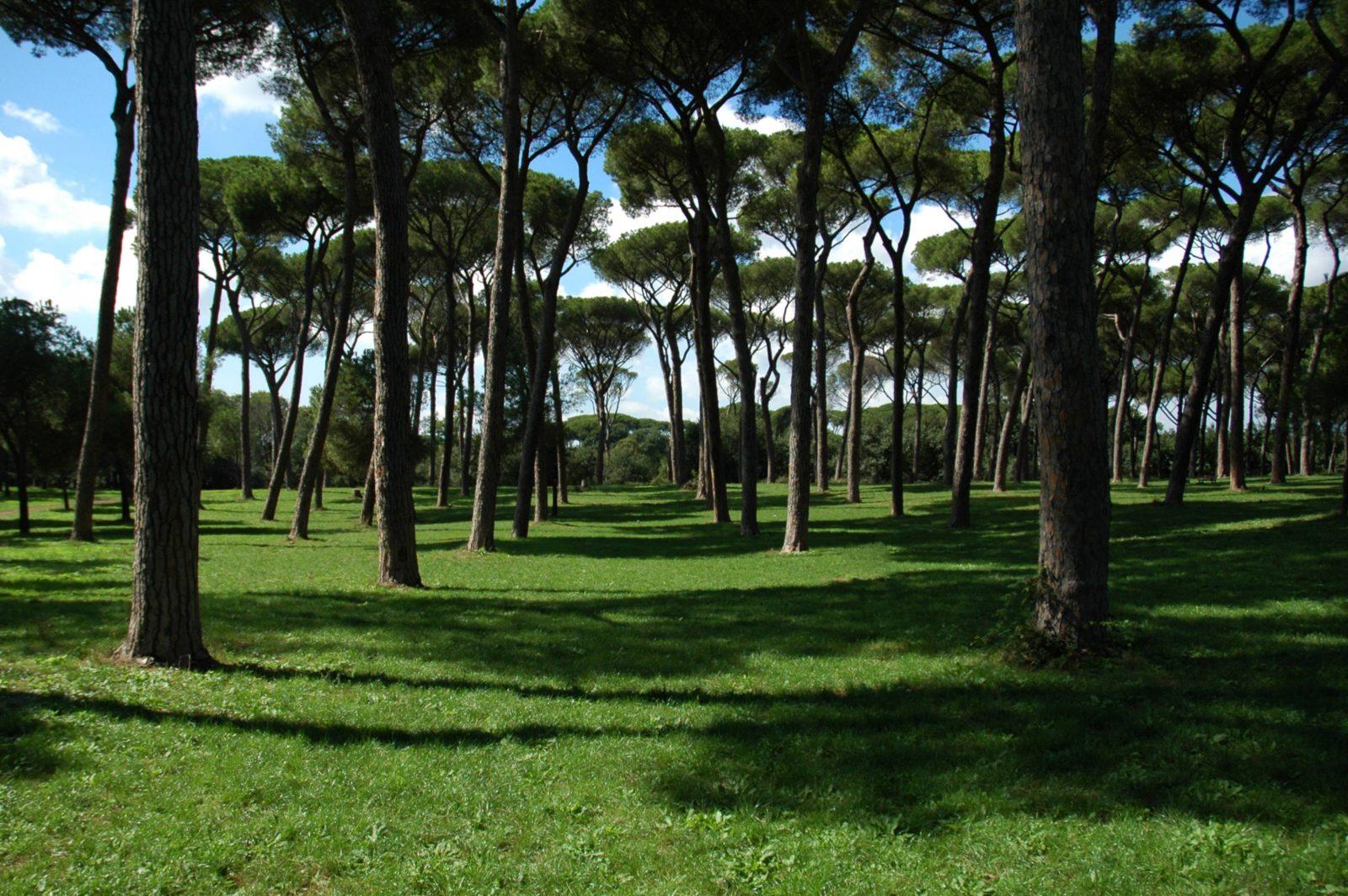Roman park trees landscape