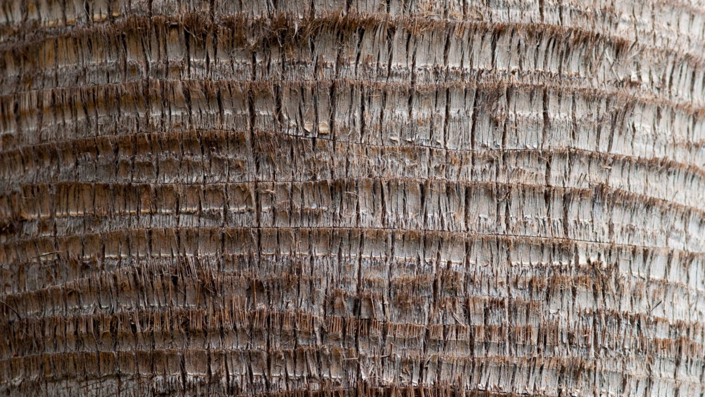 Rounded Palm Tree Trunk Pattern