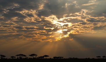 Serengeti National Park sunrise, Tanzania, Africa