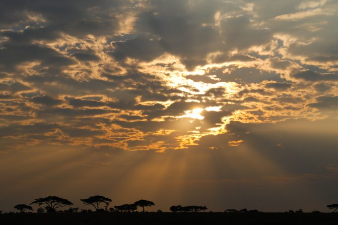 Serengeti National Park sunrise, Tanzania, Africa