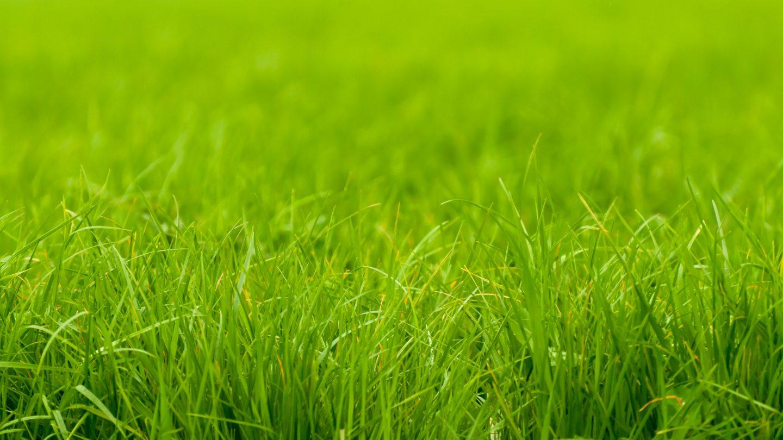 Soft focus green grass edge background