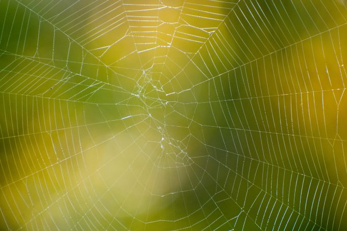 Spider Web yellow green bokeh