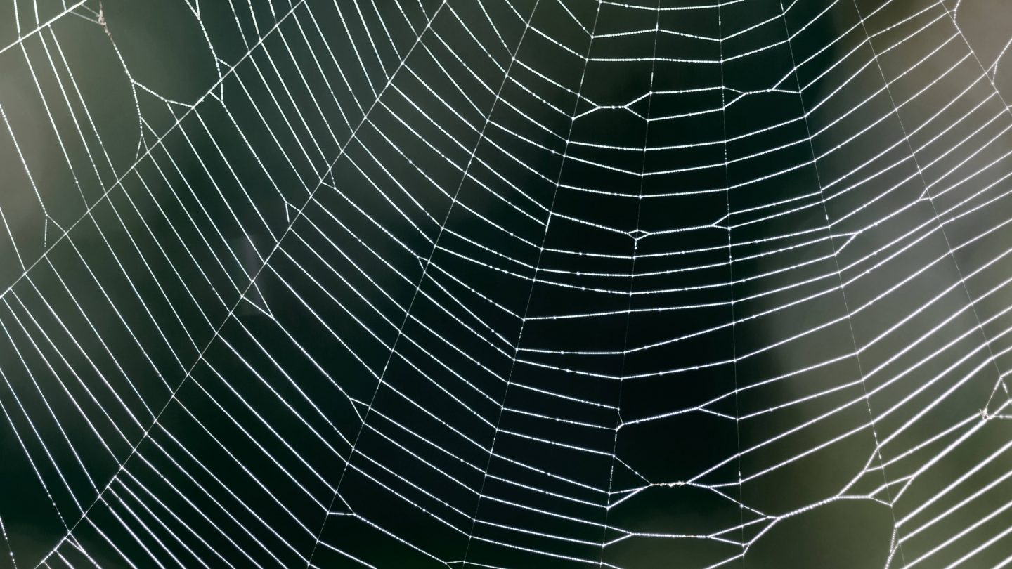 Spider web close-up with blurry background