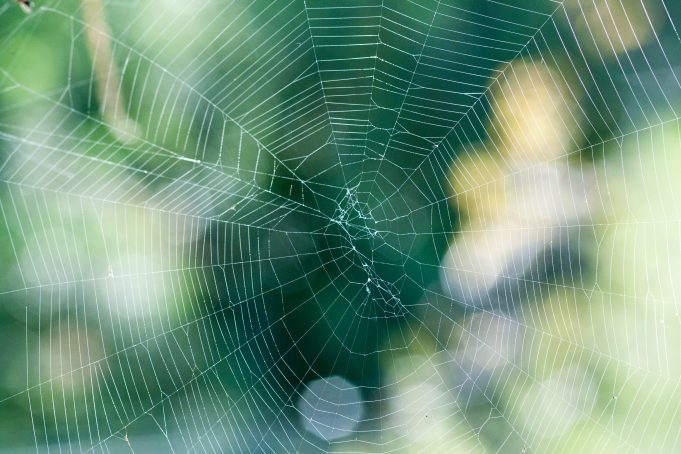 Spiderless Web