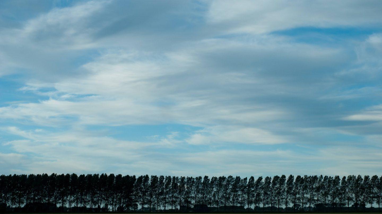 Stretched clouds on a treeline landscape