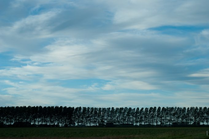 Stretched clouds on a treeline landscape
