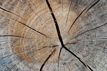 Tree Log Section Texture