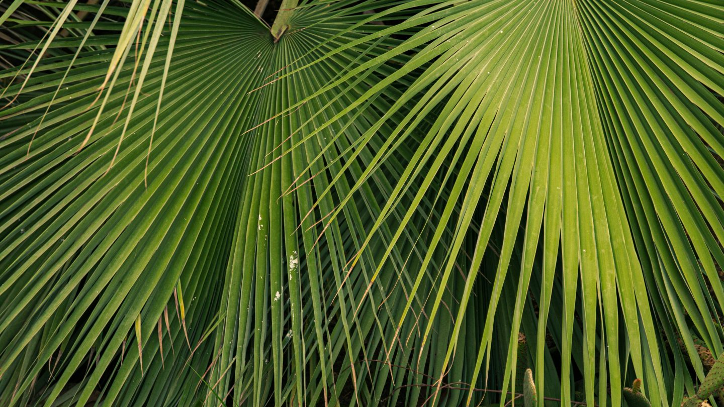 Tropical leaves jungle background