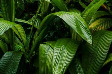 Tropical rainforest vegetation moist leafes