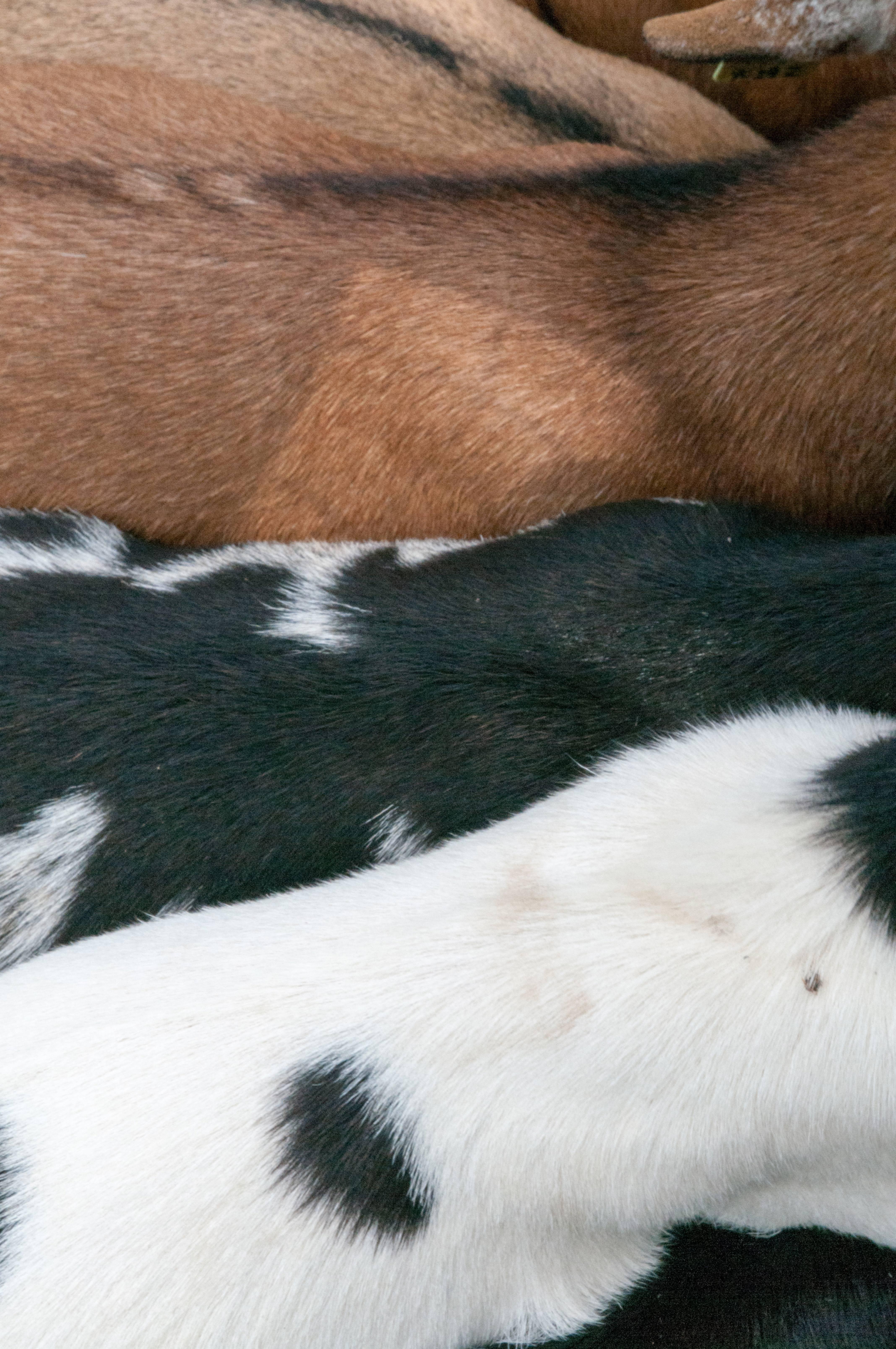 Various Types of Goat Fur