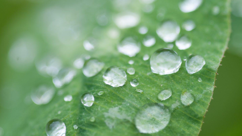 Waterdrops leafs dew green background stockphoto