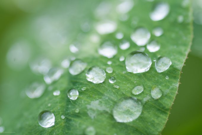 Waterdrops leafs dew green background stockphoto