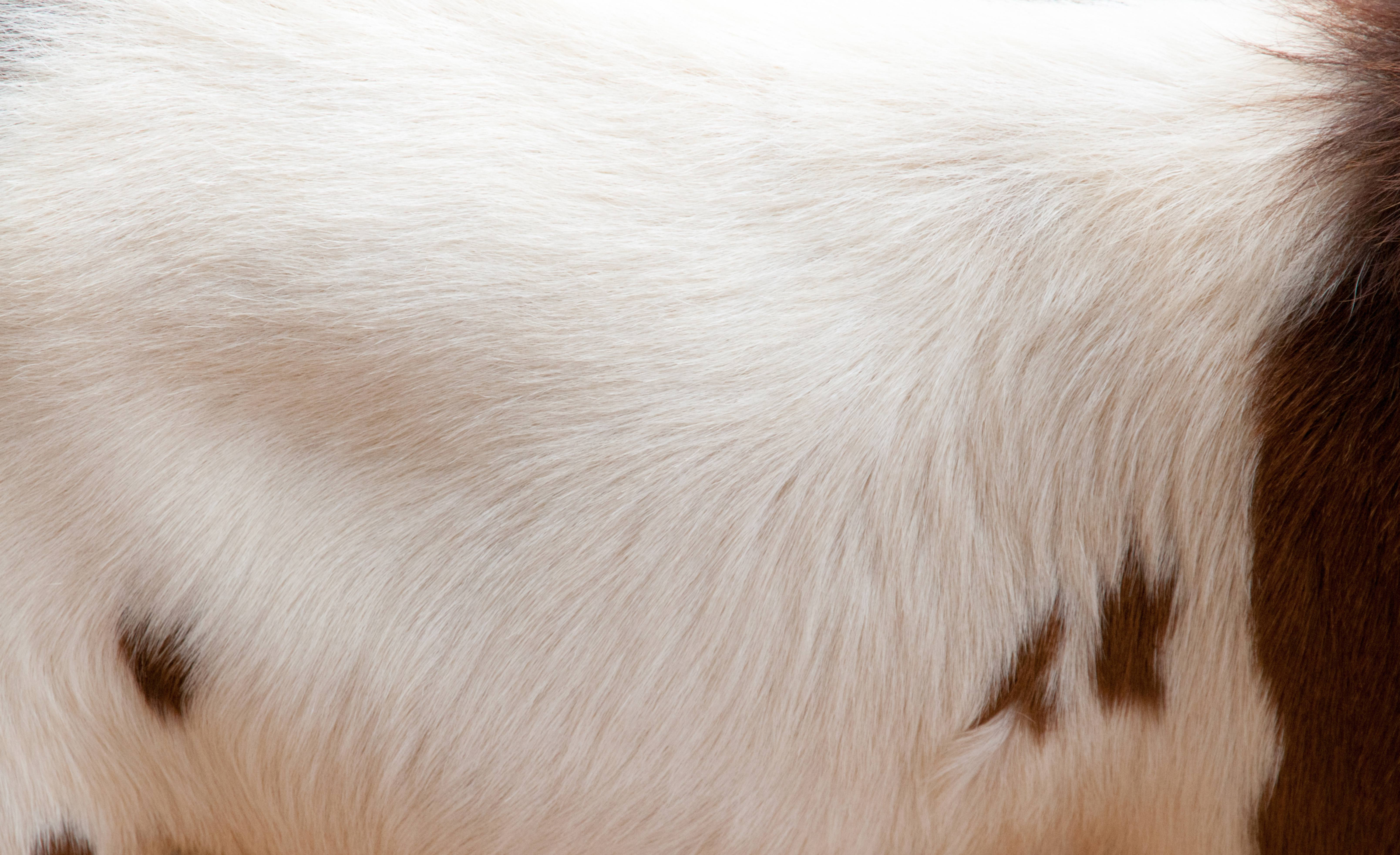 Brown Goat Fur Texture