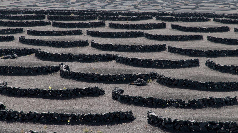 Wine plants stone embraces landscape