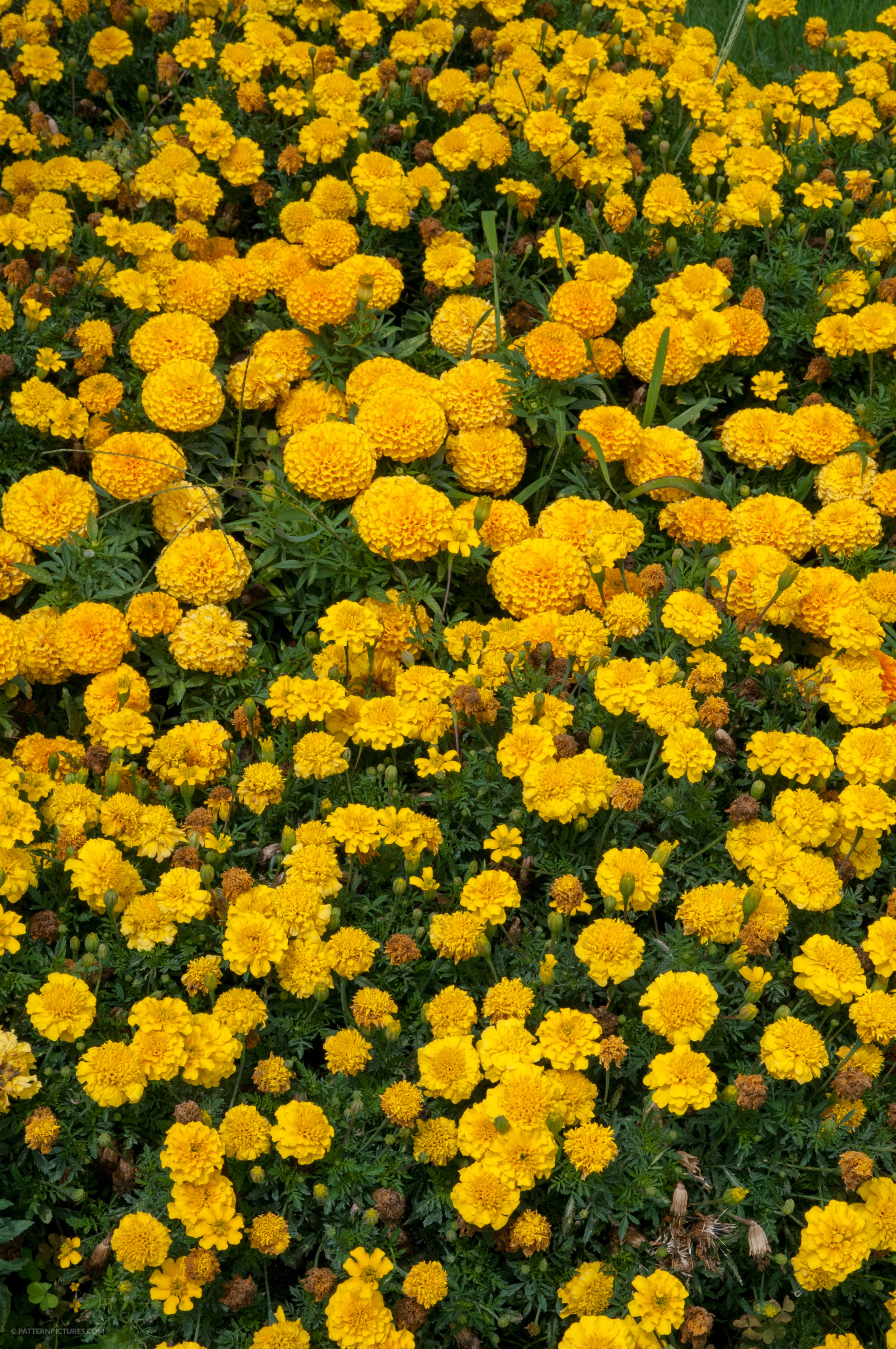 Yellow flowers texture free photo