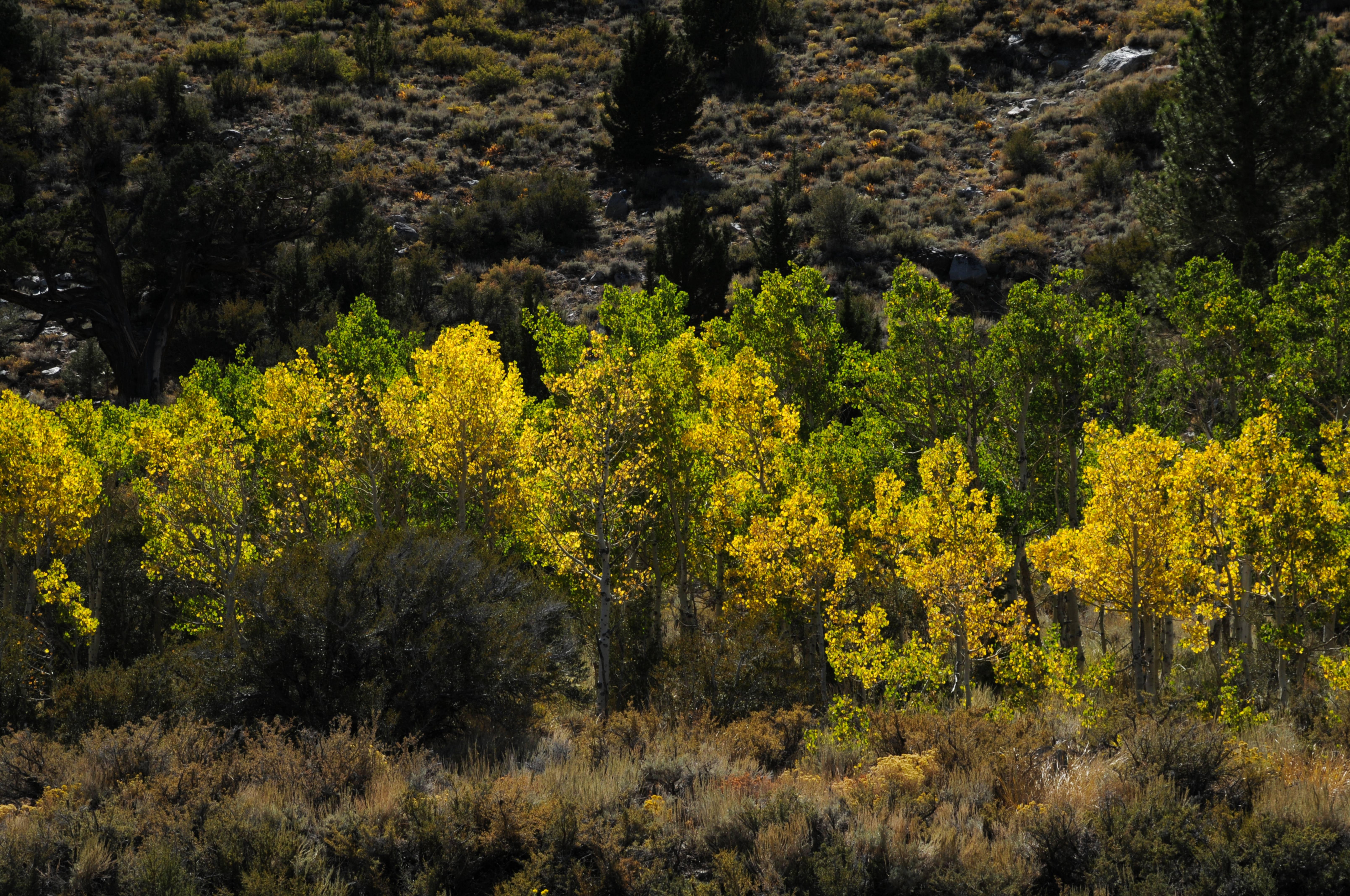 Yosemite mountain hill green yellow trees