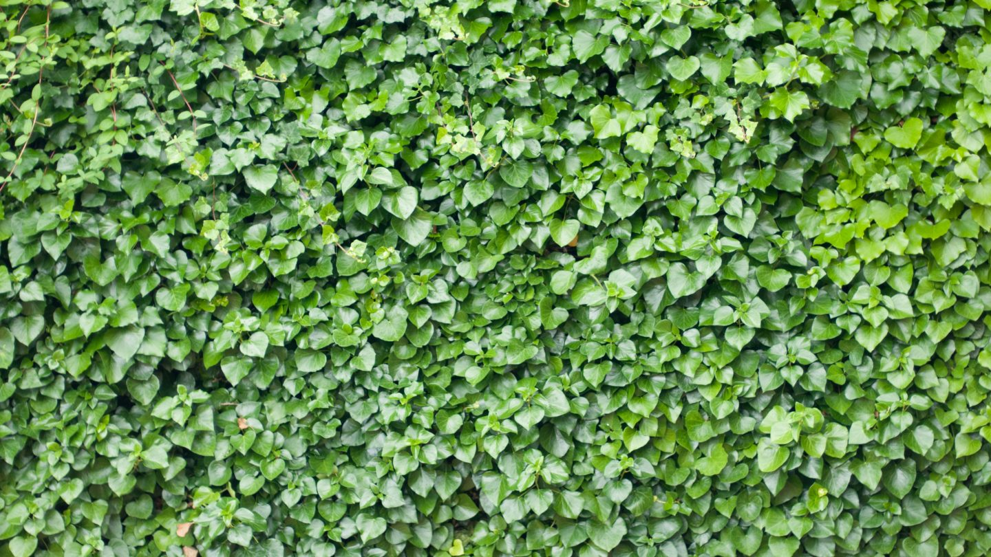 Stock photo green leaves for background