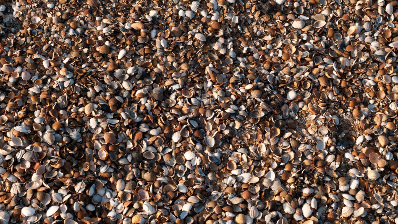 Tiny shells background