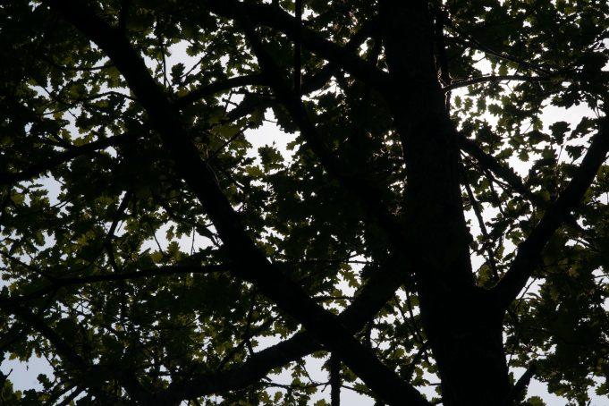 Tree shadow pattern