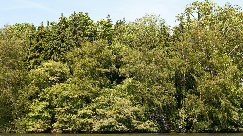 Treeline lake backdrop