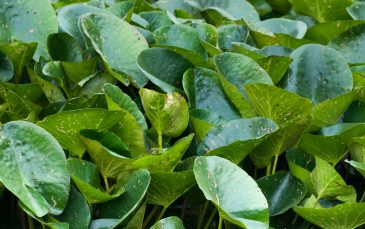 Water plant leaves texture