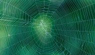 Spider Web on Monotone Green Background