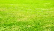 Full frame green grass field