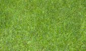 Full Frame Green Grass Texture